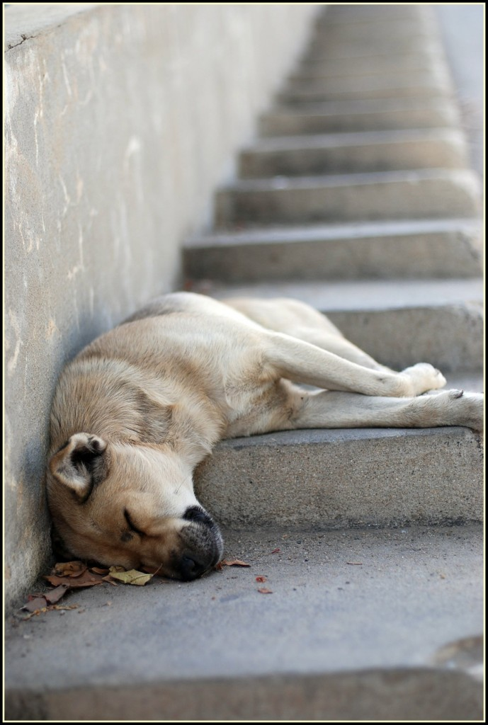 dog sleeping on stairs