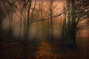 Light Through the Fog, Donnie Nunley, Flickr